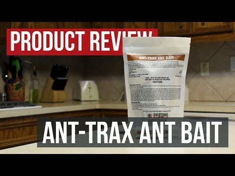ant-trax-ant-bait:-product-review
