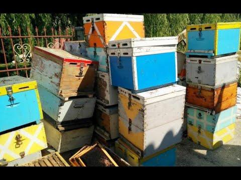 Αλκυονίδες μέρες, και τι πρέπει να κάνουμε. φλέγων μελισσοκομικό θέμα...