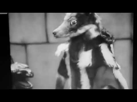 Cinemafanatic Quickies: Story of the Fox (1930 Furry Movie) Review