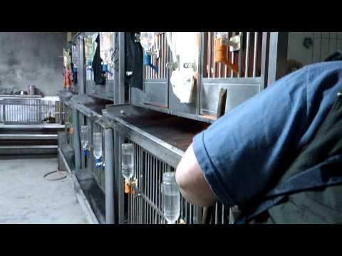 寵物美容保健影音教學