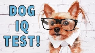 Dog Iq Test:testing My Dogs' Intelligence!