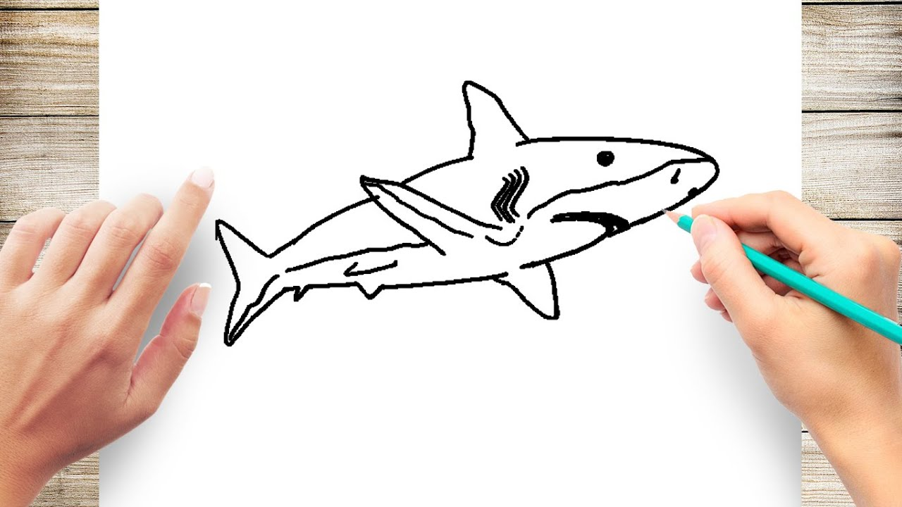 Shark Pictures For Kids To Color - Coloring Home | 720x1280