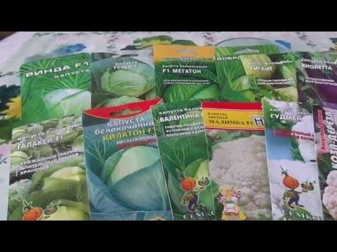 Посев разных сортов капусты на рассаду без пикировки.