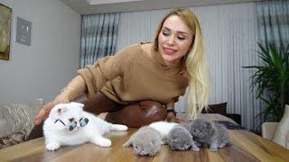 Yavru Kedilerimizin Gözleri Açıldı! Kedilerimize İsim Koyuyoruz! Tiktok Challenge!