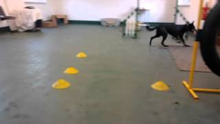 Sadie At Our East Yorkshire Centre Trying Out The Agility Equipment!
