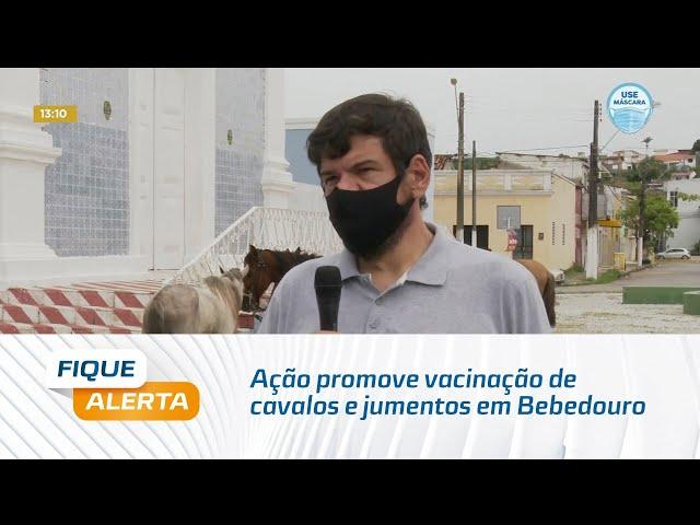 Ação promove vacinação de cavalos e jumentos em Bebedouro