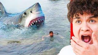 MASSIVE Shark sneaks up on boy..