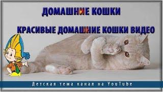 Домашние кошки.Красивые домашние кошки видео
