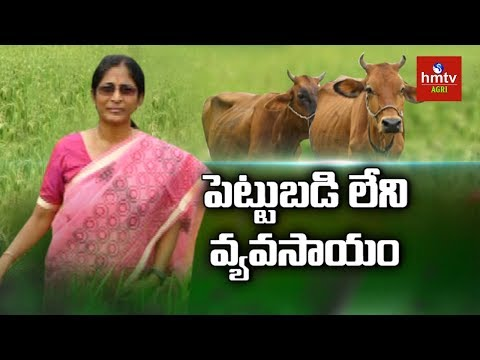 Natural Farming | Organic Paddy Farming Tips By Women Farmer | hmtv Agri