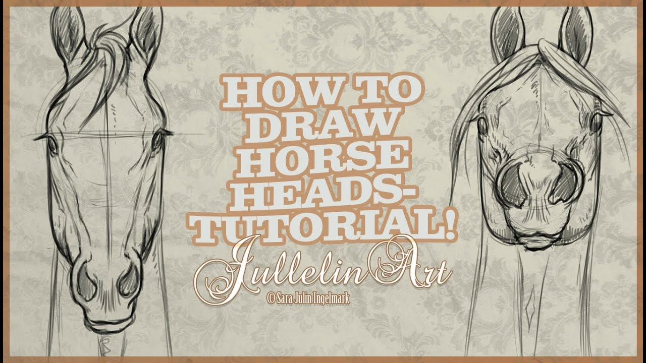 How To Draw Horse Heads From The Front  Tutorial!