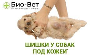 Шишки у собак под кожей. Ветеринарная клиника Био-Вет.
