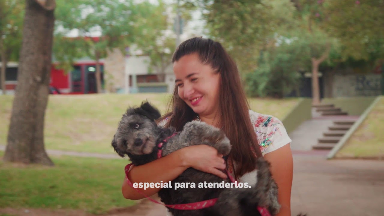Centro asistencial para perros y gatos - Río Cuarto bien alto