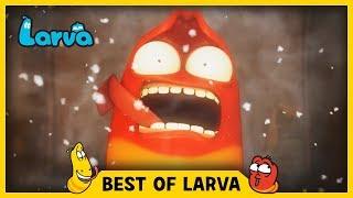 larva  best of larva  funny cartoons for kids  cartoons for children  larva 2017 week 41