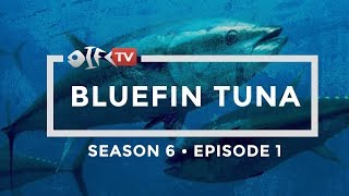 2019 Season 6 Bluefin Tuna Episode 1 of 2