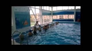 Повторение простейших упражнений по плаванию способом кроль на груди