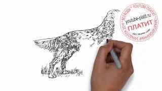 Нарисованные карандашом собаки  Как нарисовать гордую собаку