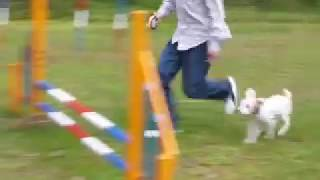 初めてのハードル。飼主も跳ぶ。 <2008/10 軽井沢プリンス 森のドッグ...
