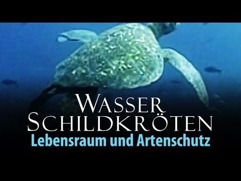 Wasserschildkröten - Lebensraum und Artenschutz 2011 Dokumentation | Film deutsch