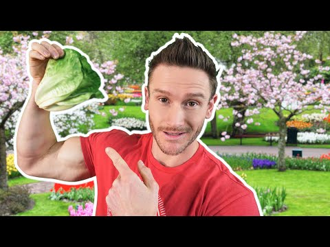 Best 5 Greens To Eat While Low Carb