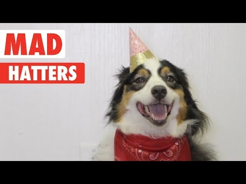 Mad Hatters | Cute Pets in Hats!