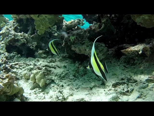 Les eaux limpides de Beveridge Reef