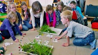 Prvouka 2. ročník, Rozmnožování rostlin