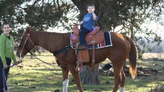 Horse for sale Ardmore Oklahoma