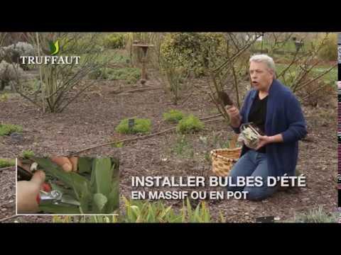 Comment planter des oignons jardinerie truffaut tv doovi for Conseil du jardinier