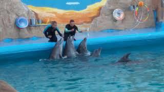 Шоу с дельфинами