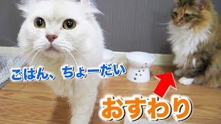 【異例】猫の「究極のおねだり」その理由とは!?