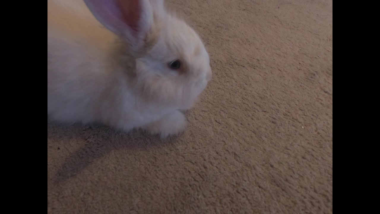 Members video of extra bunny footage