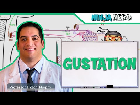 Neurology | Gustation (Taste Pathway)