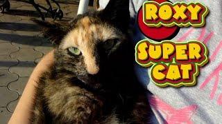 Любимая кошка Непеты!