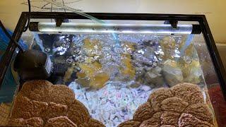 Gambar cover Setting Aquarium Kura-kura Brazil plus Basking tempat berjemur