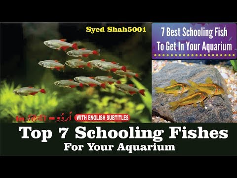 Top 7 Aquarium Schooling Fish  Best Beginner Fish #Top 7 Schooling Fishes For Planted Aquarium