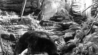 Kiko vs. Cave Bear