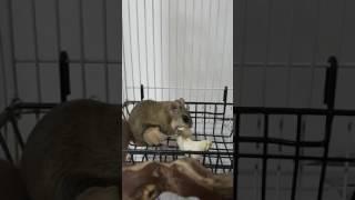 하늘다람쥐 버섯먹는중