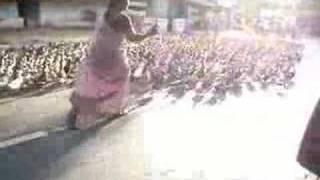 Patos invadem Ranipet-India