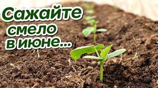 Обязательно посадите эти овощи и зелень в июне! Что можно посадить в июне на огороде?