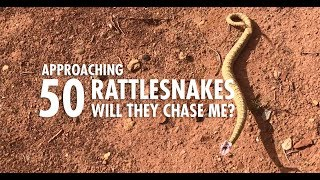 Approaching 50 Wild Rattlesnakes to See If They Attack