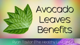 Avocado Leaves Benefits And Uses