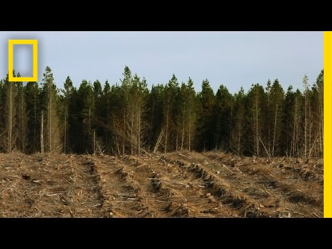 Here, Cutting Down Millions of Trees is Actually a Good Thing   National Geographic