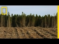 Here, Cutting Down Millions of Trees is Actually a Good Thing | National Geographic