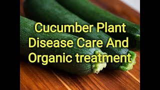 cucumber plant disease care and treatment