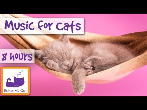 8 Hour Playlist for Cats and Kittens! Music for Cats of All Breeds! Sleep and Relaxation Cat Music