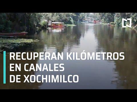 Limpieza en canales de Xochimilco |  Recuperan 50 kilómertos en canales de Xochimilco - Las Noticias