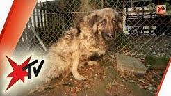 Hunde in Not – dramatische Zustände bei einem deutschen Hundehalter | stern TV