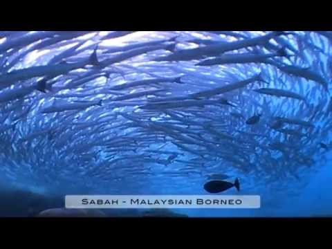 Diving in Sabah, Borneo, Malaysia