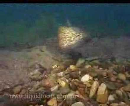 Freshwater Fish Of NSW Australia Part 1