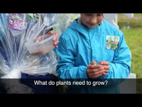 DIY: Plant Radishes